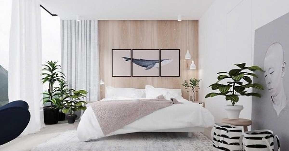 5 Loại Cây Nên Trồng Trong Phòng Ngủ Tốt Cho Sức Khỏe